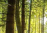 murando Akustikbild Wald 225×90 cm Bilder Hochleistungsschallabsorber Schallschutz Leinwand Akustikdämmung 5 TLG Wandbild Raumakustik Schalldämmung – Waldlandschaft Natur Baum c-C-0177-b-n - 2